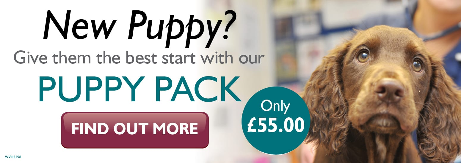 Puppy Pack covering puppy injections, flea & worm treatment, and much more for only £55 at vets in Hale