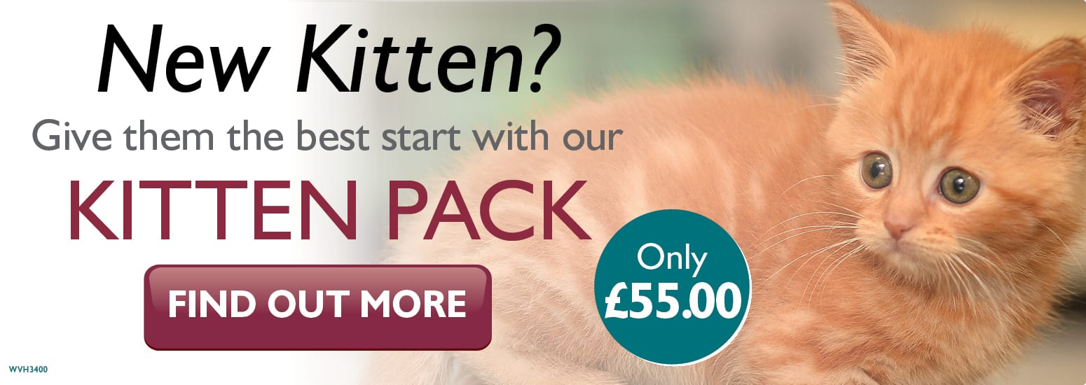 Kitten Pack covering kitten injections, flea & worm treatment, and much more for only £55 at vets in Hale
